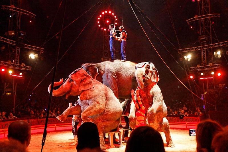 Cirque : vers une sortie de piste des animaux